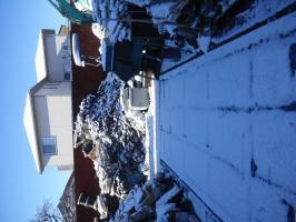 昨日の雪♪画像1